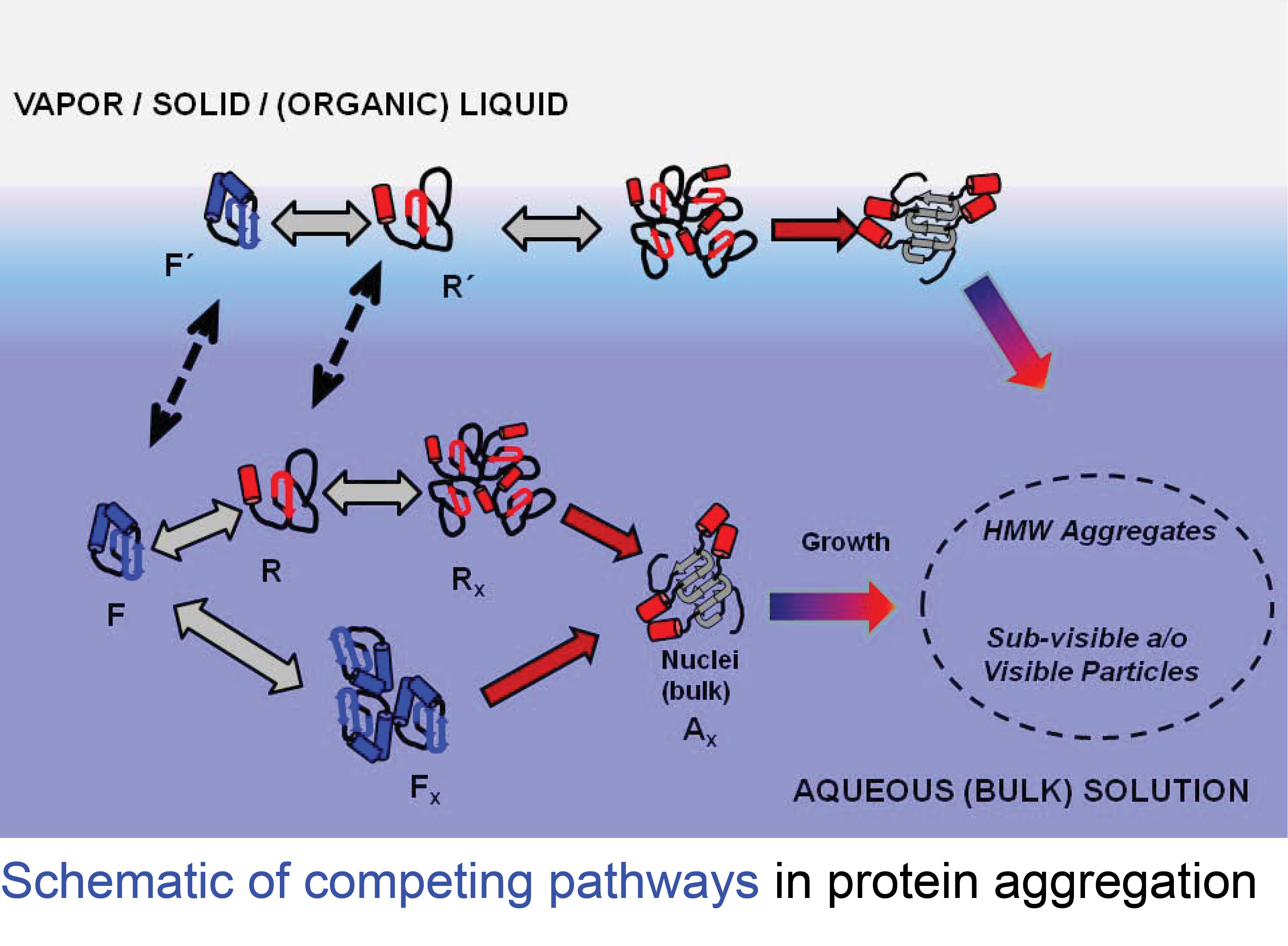 Selected Experiments with Proteins at Solid-Liquid Interfaces